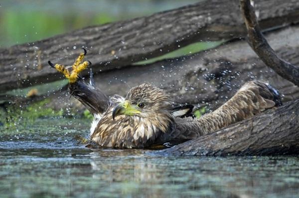 funny-birds-40-photos- (5)