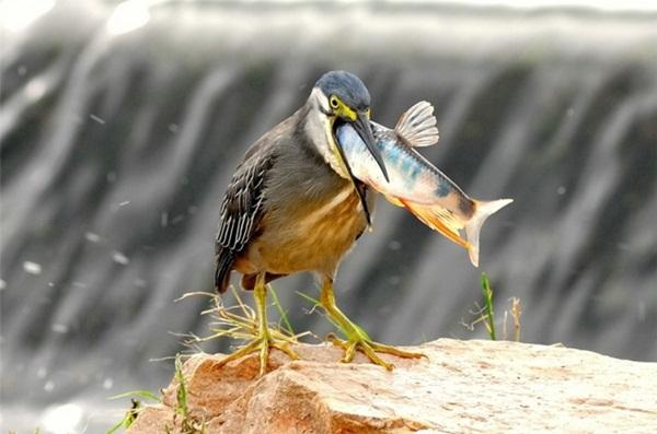 funny-birds-40-photos- (7)
