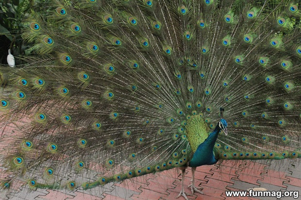kl-bird-park-best-things-to-see-in-kuala-lumpur- (20)