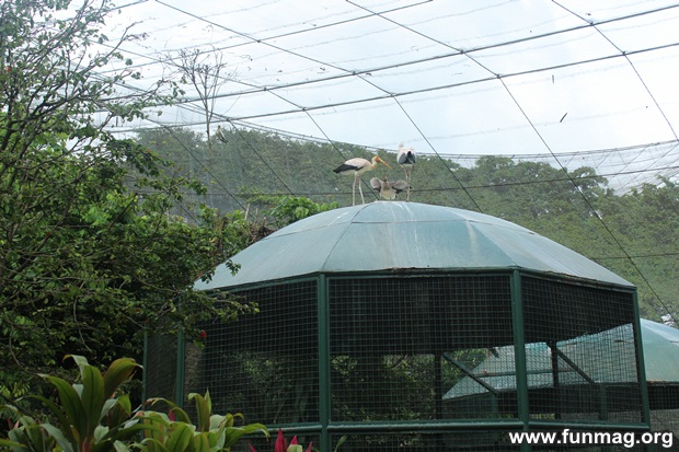 kl-bird-park-best-things-to-see-in-kuala-lumpur- (23)
