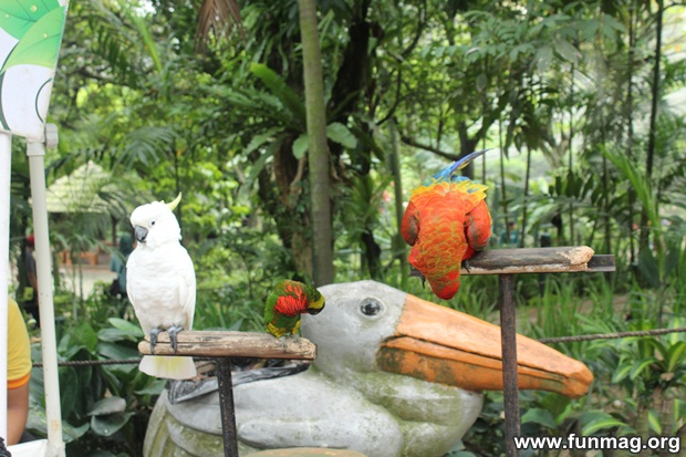 kl-bird-park-best-things-to-see-in-kuala-lumpur- (31)