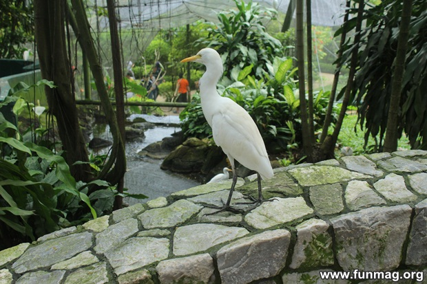 kl-bird-park-best-things-to-see-in-kuala-lumpur- (32)
