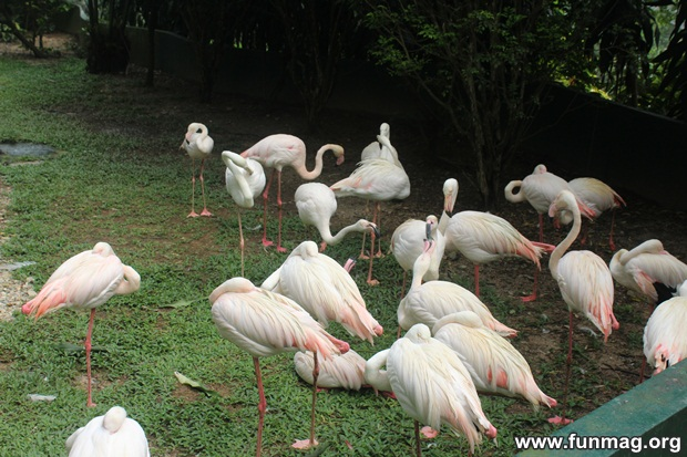 kl-bird-park-best-things-to-see-in-kuala-lumpur- (56)