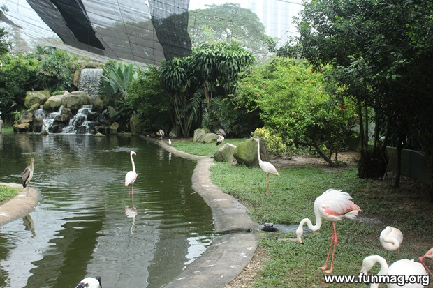 kl-bird-park-best-things-to-see-in-kuala-lumpur- (59)
