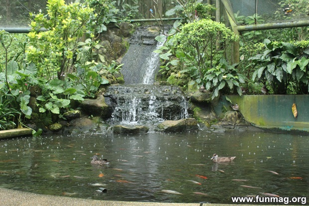 kl-bird-park-best-things-to-see-in-kuala-lumpur- (63)