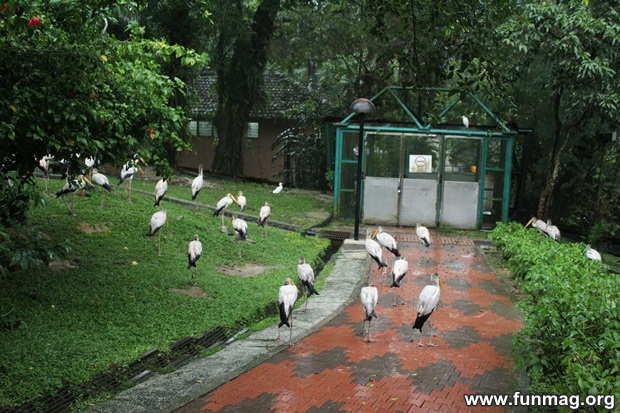 kl-bird-park-best-things-to-see-in-kuala-lumpur- (72)