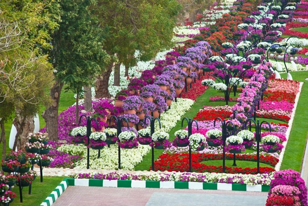 al-ain-paraidse-beautiful-flowers-park- (3)