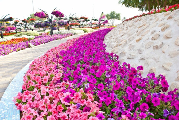 al-ain-paraidse-beautiful-flowers-park- (8)