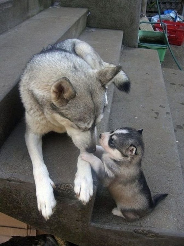 baby-animals-with-their-parents- (30)