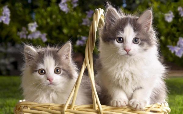 cute-cats-wallpaper-20-photos- (1)