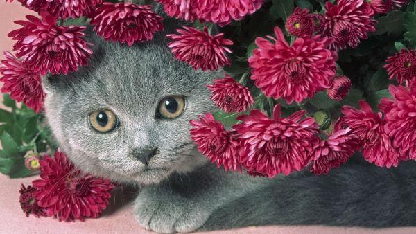 cute-cats-wallpaper-20-photos- (4)