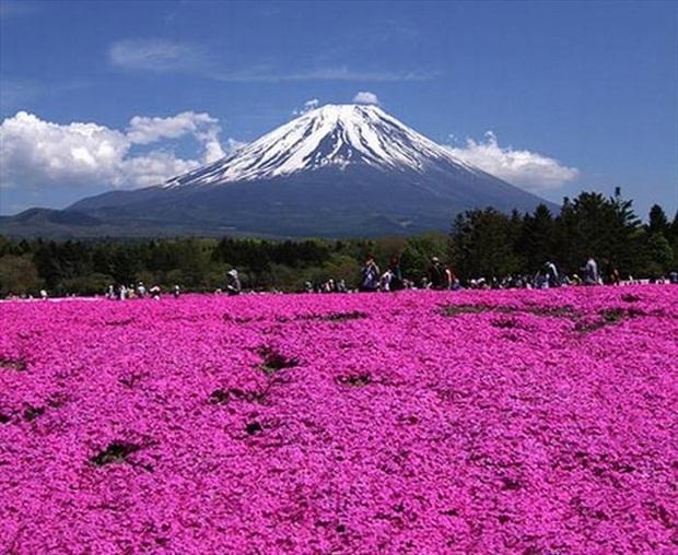 field-of-flowers- (1)