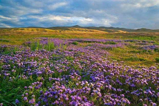 field-of-flowers- (39)