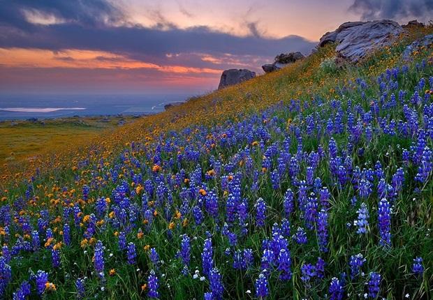 field-of-flowers- (4)