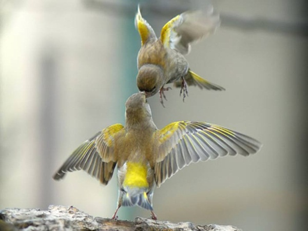 most-beautiful-birds-in-the-world-37-photos- (2)