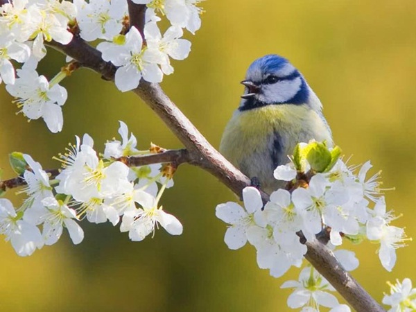 most-beautiful-birds-in-the-world-37-photos- (4)