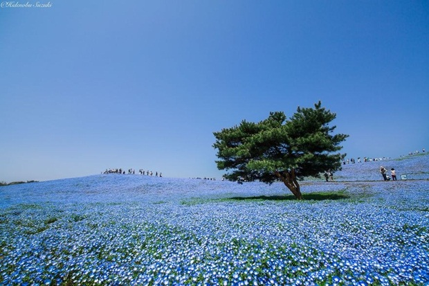 beautiful-places-to-visit-in-japan- (2)