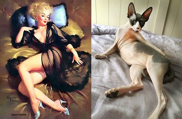 cats-imitate-the-girls- (6)