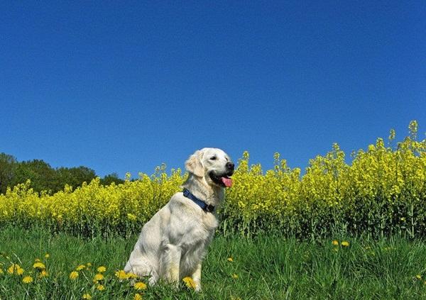 dogs-in-flowers- (18)