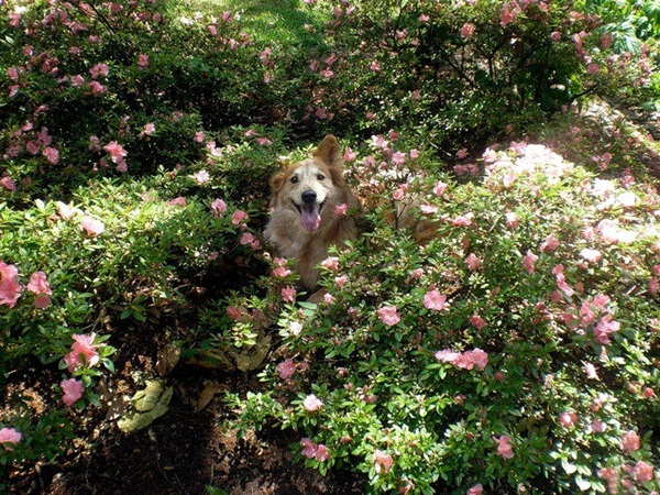 dogs-in-flowers- (3)