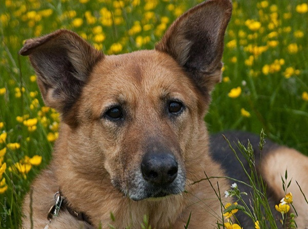 dogs-in-flowers- (6)