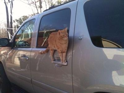 funny-cats-25-photos- (16)