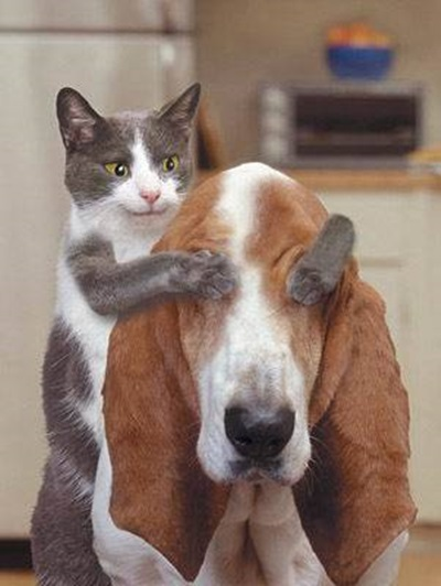 funny-cats-25-photos- (2)