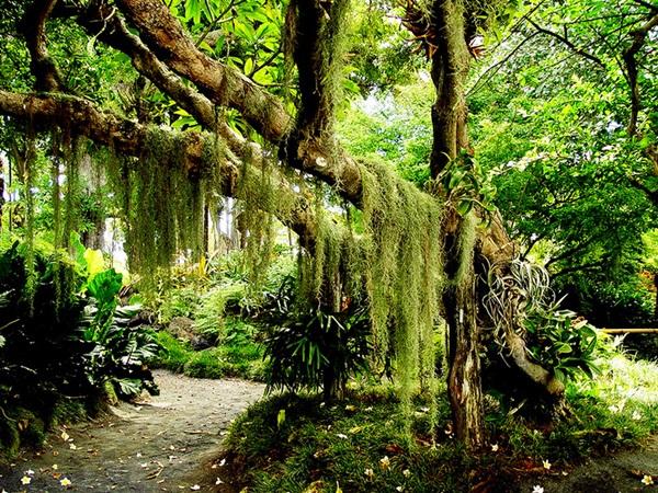 maui-gardens- (2)