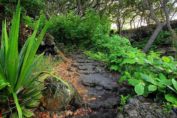 maui-gardens- (6)