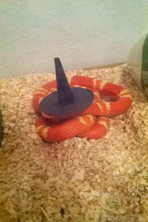 snakes-in-hats- (5)