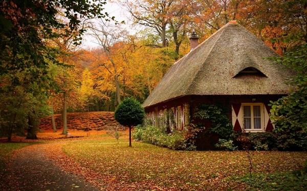 wood-house- (19)