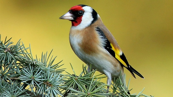 birds-on-tree- (11)