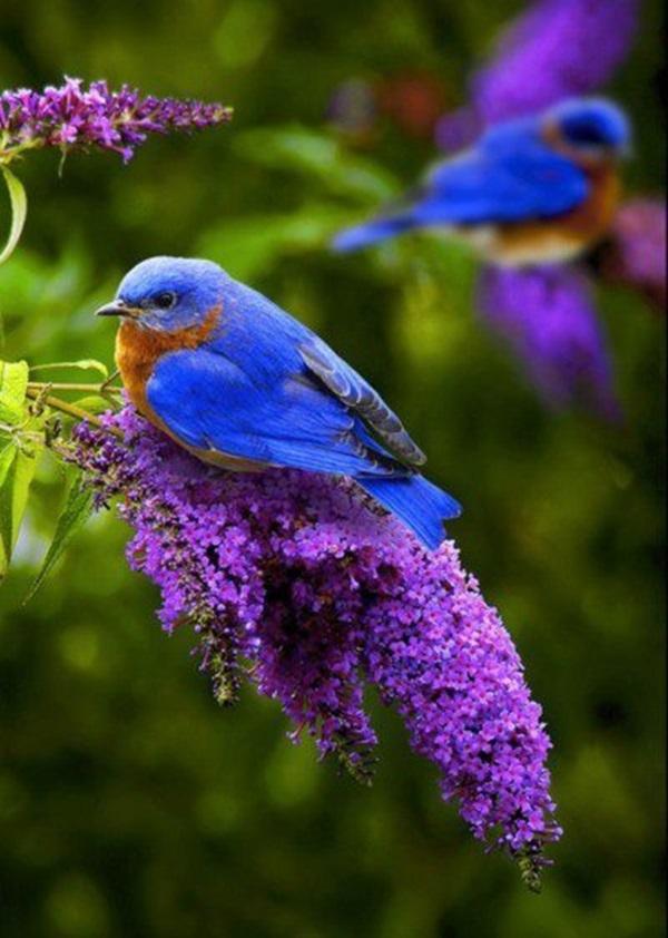 birds-on-tree- (16)
