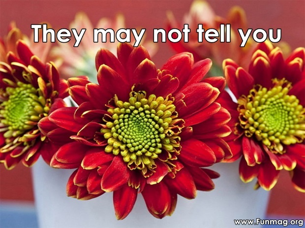 friends-are-like-flowers-friendship-cards- (14)