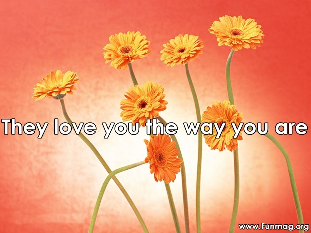friends-are-like-flowers-friendship-cards- (21)