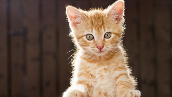 kitten-wallpaper- (1)