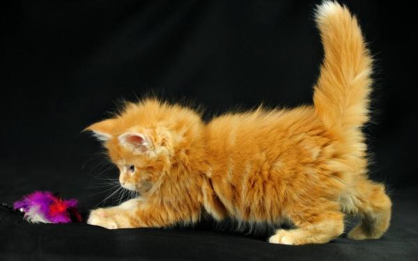 kitten-wallpaper- (13)
