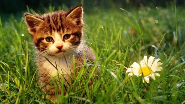 kitten-wallpaper- (15)