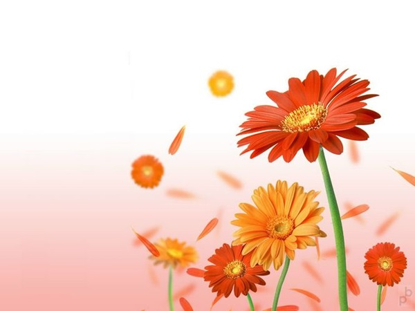 most-beautiful-flowers-40-photos- (10)