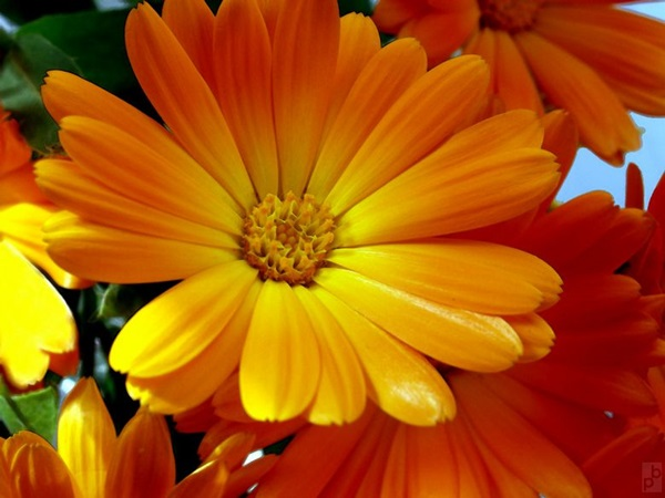 most-beautiful-flowers-40-photos- (11)