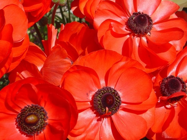most-beautiful-flowers-40-photos- (12)