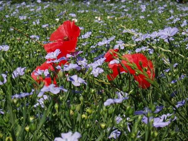 most-beautiful-flowers-40-photos- (24)