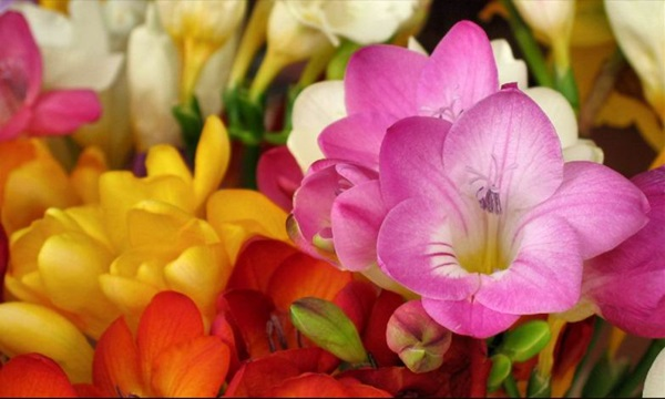 most-beautiful-flowers-40-photos- (26)