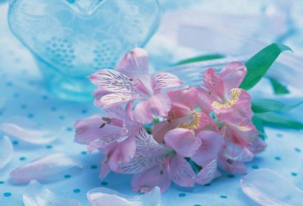 most-beautiful-flowers-40-photos- (29)