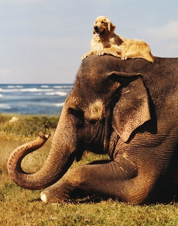 unusual-animal-friendship- (14)