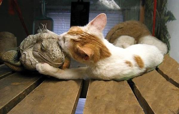 unusual-animal-friendship- (19)