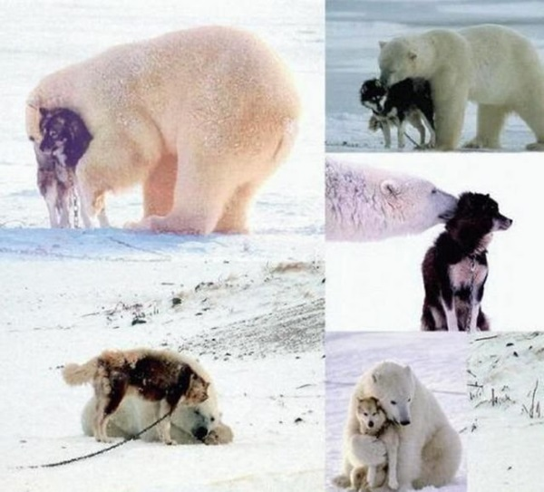 unusual-animal-friendship- (7)