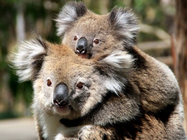 pictures-of-cute-baby-animals-with-mom- (15)