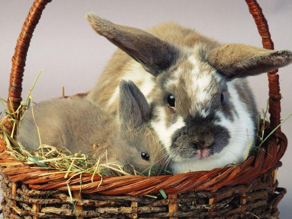 bunny-photos- (2)