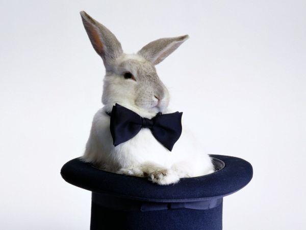 bunny-photos- (3)
